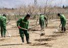 کاشت ۳۰۰۰ اصله نهال در پاسارگاد